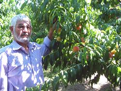 Bursa'da Meyve Sebze Üreticileri Rekolte Artışından Ümitli